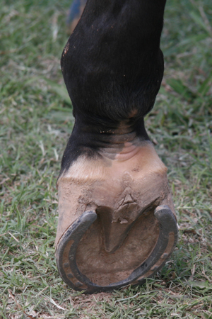 Partial Pastern