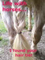 Life with horses...
