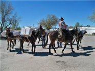 Horse Pack Trip Checklist Pack Light Pack Smart