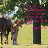 f73b6b8beab Horse Quotes and Sayings for Equine Enthusiasts