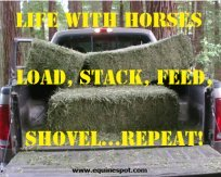 Life with horses...load, stack, feed, shovel...repeat!