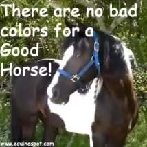 There are no bad colors for a good horse