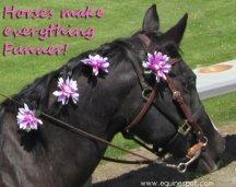 Horses make everything funner