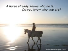 A horse already knows who he is. Do you know who you are?