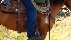 Western Horseman Photo by Rebecca Kimbel
