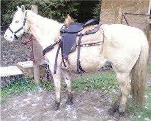 Mud aggrivates thrush in horses