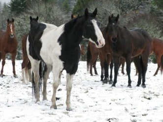 Choose the perfect name for your horse!