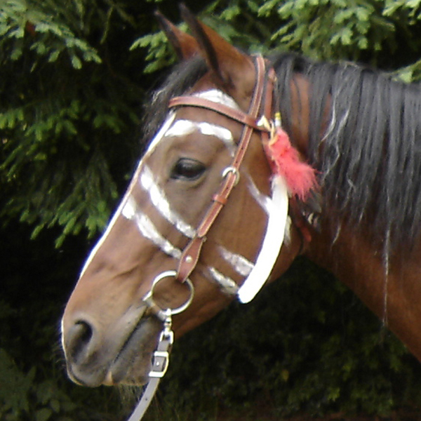 Parade horses solutioingenieria Gallery