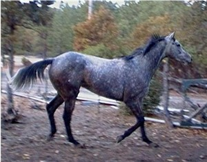 A Purebred Thoroughbred named Malachi.