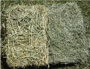 Notice the difference between these two cuts of alfalfa hay