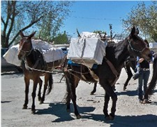 Back Country Horsemen with Carole Polasek