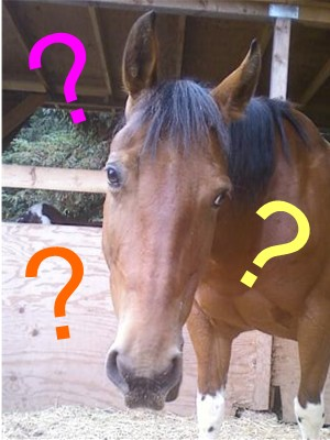 How do you go about buying a horse?