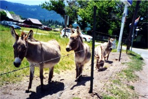 Adorable donkeys!