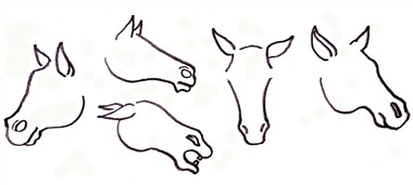 drawing a horse - the ears