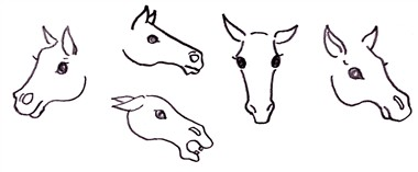 drawing a horse - the eyes