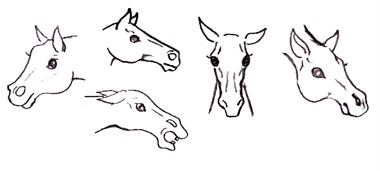 drawing a horse - realizm