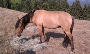 Horses have delicate digestive systems.