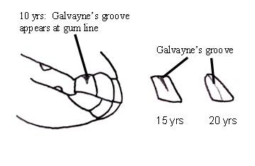 Galvayne's groove