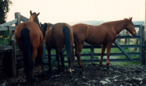 These horses clearly do not want to engage.