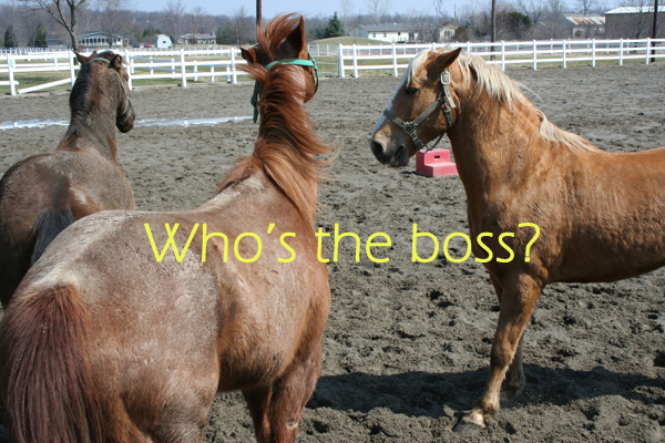 Can you tell which horse is dominant here?