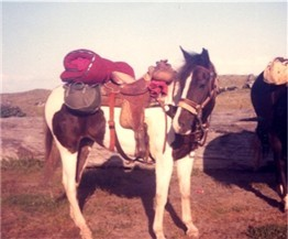 Horse camping is fun!