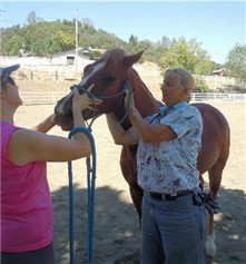 Dr. Thompson checks the movement in the horse's upper neck in an equine chiropractic exam.