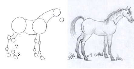 horse drawing step five