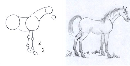 horse drawing step four