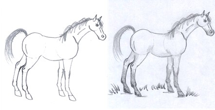 horse drawing step nine