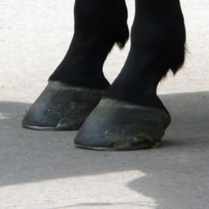 Black or Blue hoof