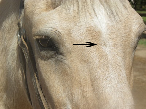 Know Your Horse Markings