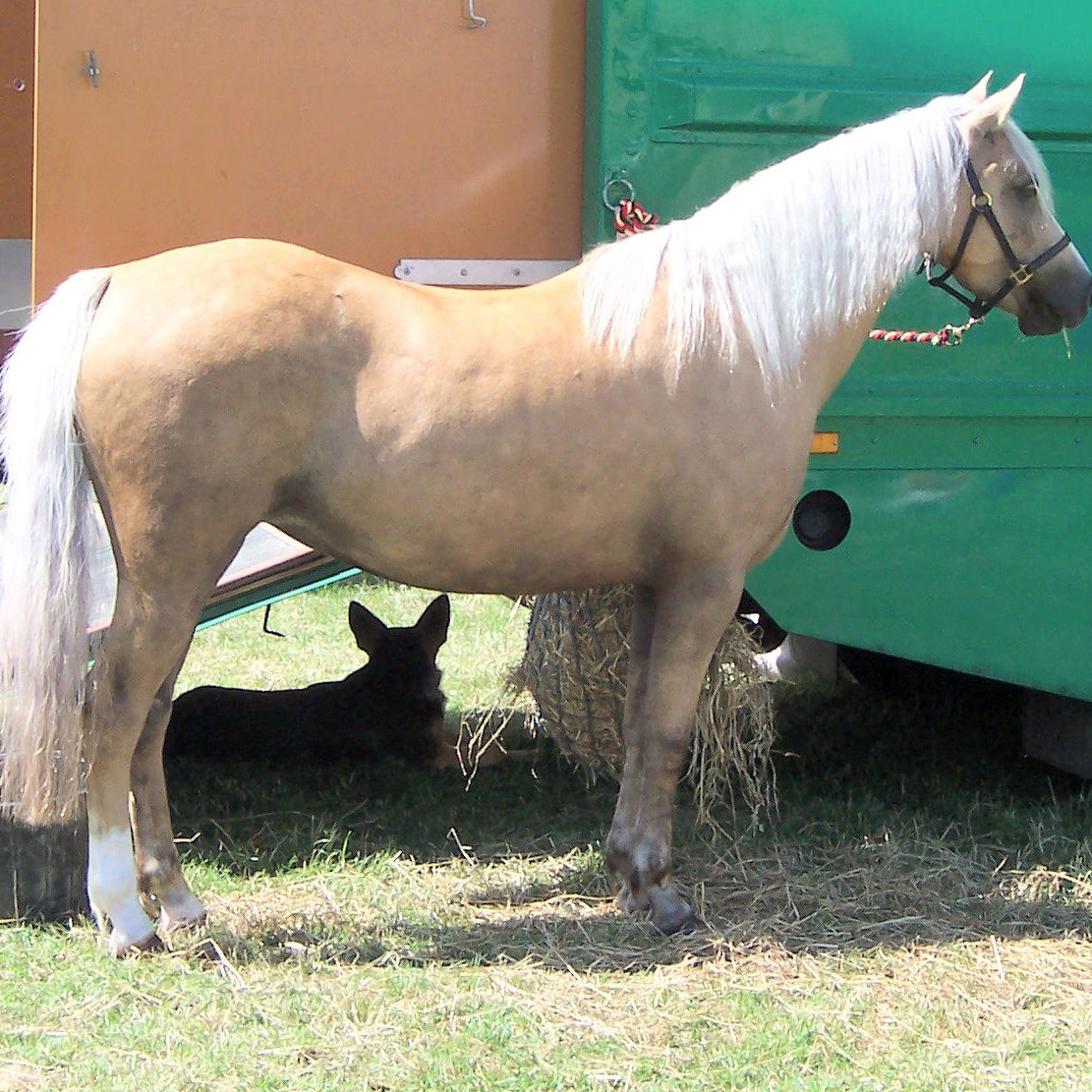 Horse Colors In Pictures