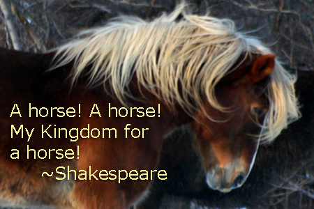 Y Horse Names Horse Quotes and Sayin...