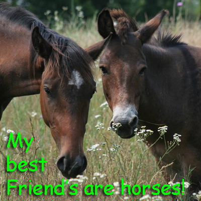 My best friends are horses!