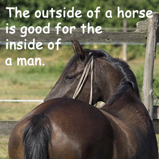 The outside of a horse...