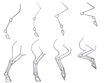 How to draw a horses back legs part 1