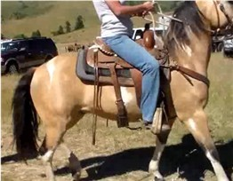 Learn how to ride a horse confidently.