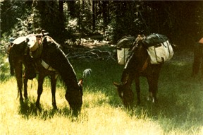 Before camping with your horse, prepare for green grass.