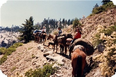 Packing with horses in the Trinity Mountains
