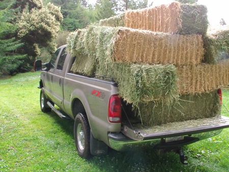 Truck loaded with horse hay.