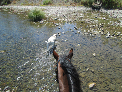 Allow watering on a long hot trail ride