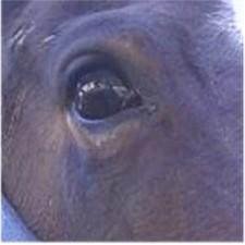 Worried eye