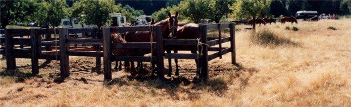 Primitive corrals at a horse camp.