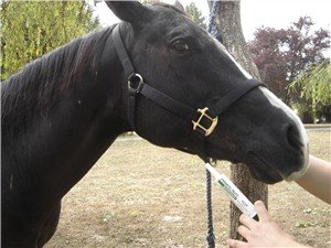 Deworming horses is a necessary evil.