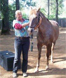 Equine Chiropractor Dr. Sue Thompson DVM