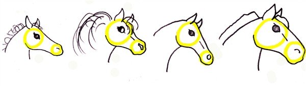 drawing a horse head - foal, pony, thoroughbred, draft