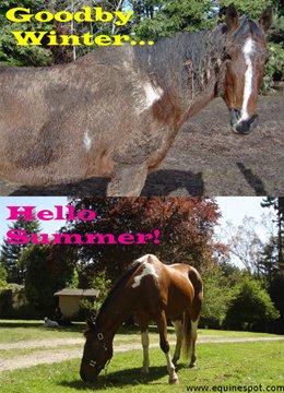 Goodbye Winter horse...