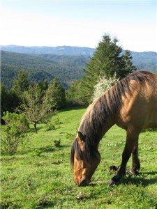 Mustangs need good feed too!