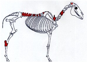 Map of one horse's chiropractic treatment.