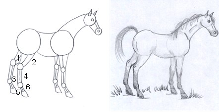 horse drawing step eight